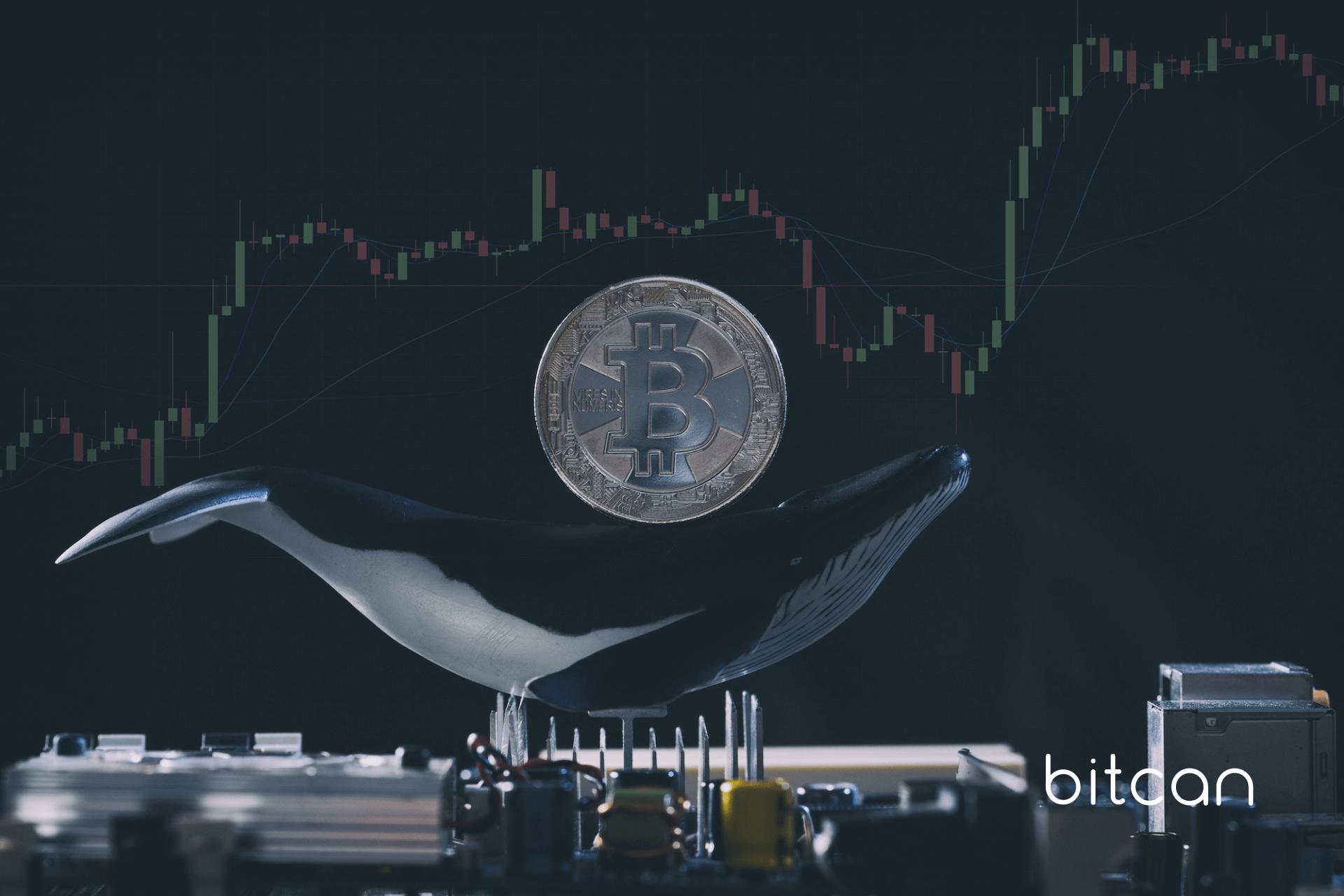 Duzi gracze na rynku bitcoina (wieloryby) sprzedali w ciągu miesiąca BTC o wartości 7 mld USD